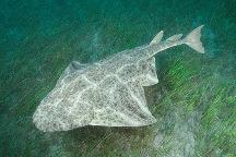 Pezangel.jpg Tiburón Tiburón Pezangel