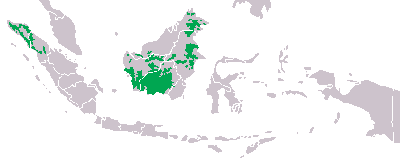 Orangudist.png Orangután Orangután Orangudist