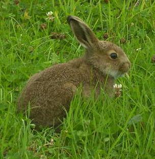 Conejo.jpg animales y mascotas