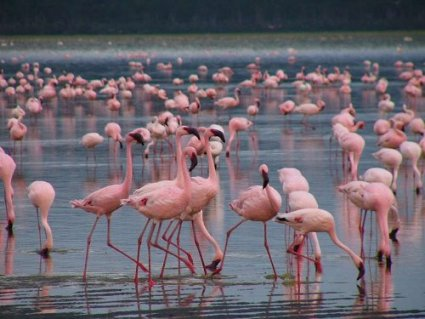 Lago Nakuru Lago2.jpg Lago Nakuru Lago Nakuru Lago2