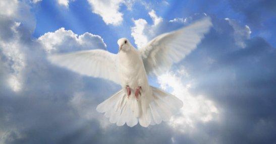 Razones para eliminar palomas (PETA vengan de a uno)