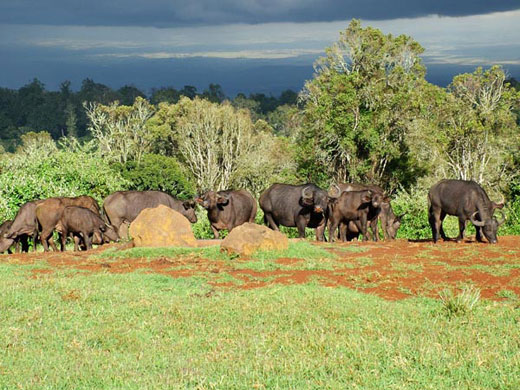 Aberdare.jpg Parque nacional de Aberdare Parque nacional de Aberdare Aberdare