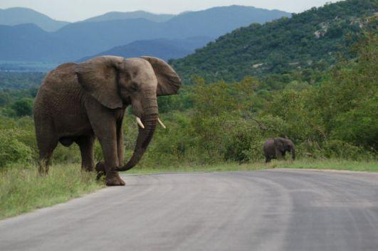 Krugerelefante.jpg Parque Nacional Kruger Park Parque Nacional Kruger Park Krugerelefante
