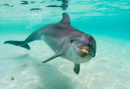 Delfin2.jpg Delfín Delfín 450px Delfin2