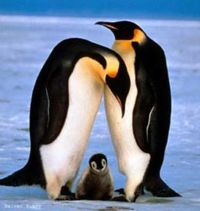 Pingüino Pingüino 200px Emperador