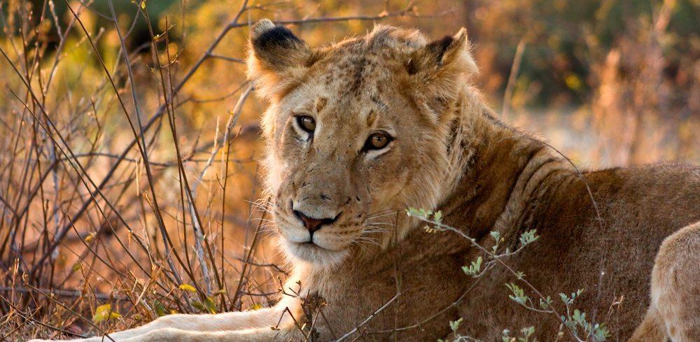leona kruger Parque Nacional Kruger Park Parque Nacional Kruger Park leona kruger