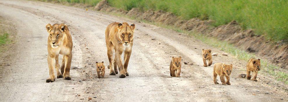 masai mara viajar Masai Mara Masai Mara masai mara viajar