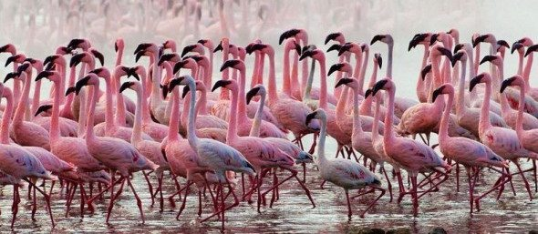 nakuru viajar Lago Nakuru Lago Nakuru nakuru viajar1