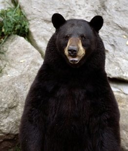 oso Oso Oso oso