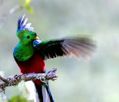 quetzal Quetzal Quetzal quetzal2