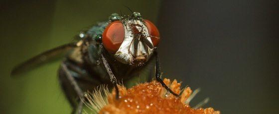 mosca Las moscas también usan alcohol para desinfectar Las moscas también usan alcohol para desinfectar mosca