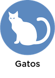 informacion gatos animales y mascotas