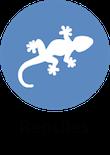 informacion reptiles animales y mascotas