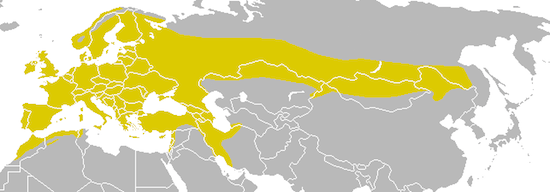 carbonero comun Carbonero común Carbonero común Parus major distribution map