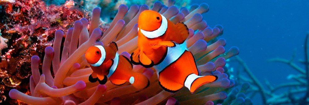 Peces Enciclopedia de Animales Enciclopedia de Animales Peces