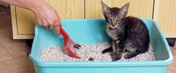Arenero gato Limpiar el arenero de tu gato Limpiar el arenero de tu gato Arenero gato