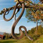 Culebra verdiamarilla