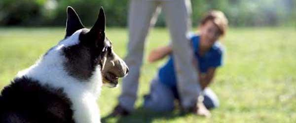 adiestramiento perro Consejos para adiestrar a nuestro perro Consejos para adiestrar a nuestro perro adiestramiento perro