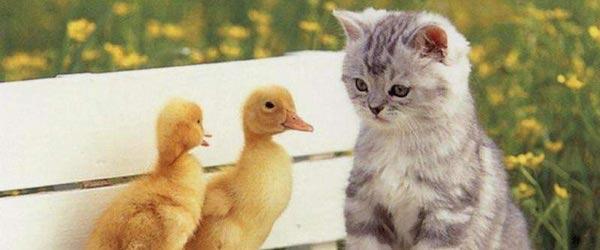 educar a tu gato Reglas básicas para educar a tu gato Reglas básicas para educar a tu gato educar a tu gato