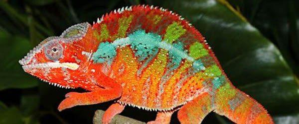 enfermedades reptiles Enfermedades más comunes en reptiles Enfermedades más comunes en reptiles enfermedades reptiles