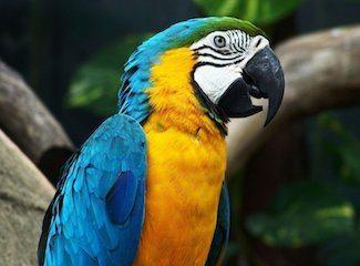 guacamayo azul y amarillo Guacamayo azul y amarillo Guacamayo azul y amarillo guacamayo azul y amarillo1