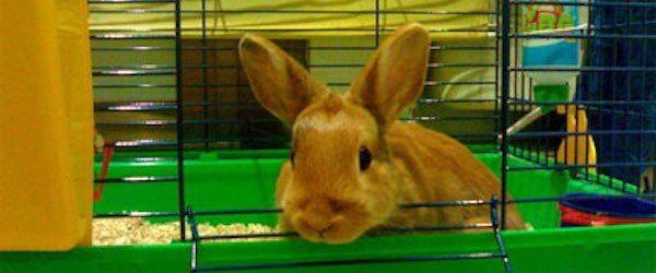jaula-conejo Jaula para conejos Jaula para conejos jaula conejo