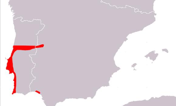 lagartija de carbonell distribucion Lagartija de Carbonell Lagartija de Carbonell lagartija de carbonell distribucion