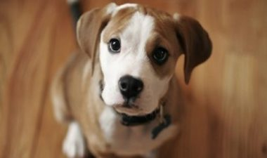 lenguaje corporal perros