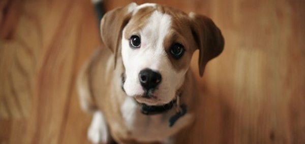 lenguaje corporal perros Entiende a tu perro: Su lenguaje Entiende a tu perro: Su lenguaje lenguaje corporal perros