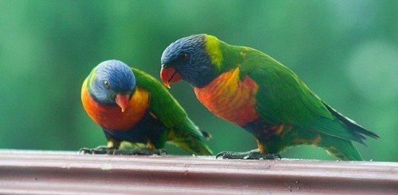 loro arco iris Loro arco iris Loro arco iris loro arco iris