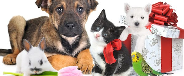 mascotas nombres Elegir el nombre de mascotas. Propuestas ordenadas alfabéticamente Elegir el nombre de mascotas. Propuestas ordenadas alfabéticamente mascotas
