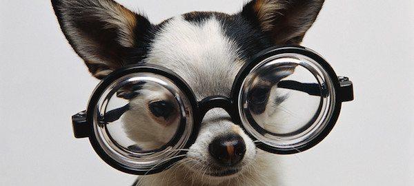 perro estudiante Estimula el aprendizaje de tu cachorro Estimula el aprendizaje de tu cachorro perro estudiante