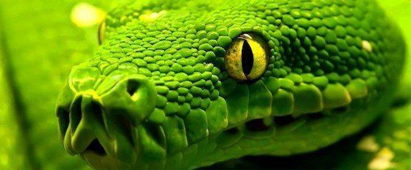 serpientes enfermedades Enfermedades de las serpientes Enfermedades de las serpientes serpientes enfermedades