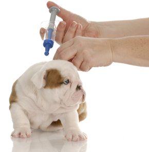 vacunar a tu perro Calendario de vacunas para tu perro Calendario de vacunas para tu perro vacunar a tu perro