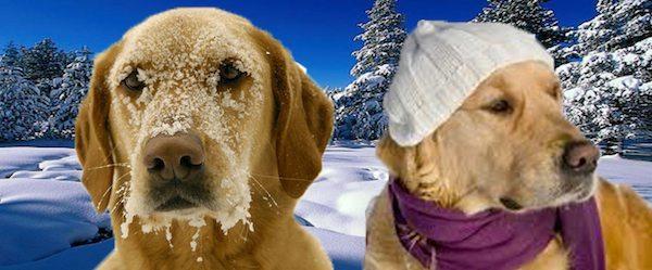 perro invierno Evita que tu perro enferme en invierno Evita que tu perro enferme en invierno perro invierno