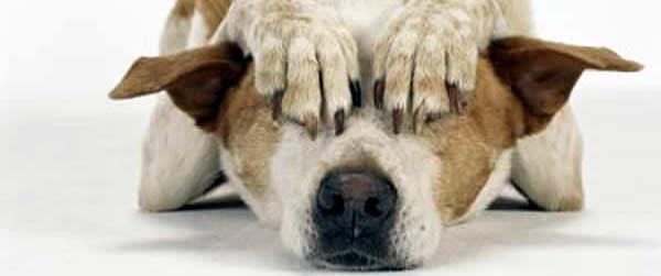 perro miedoso Qué hacer si tu perro tiene miedo Qué hacer si tu perro tiene miedo perro miedoso