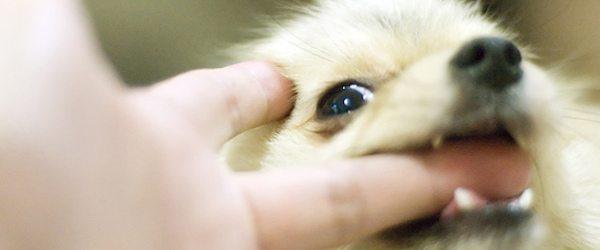 perro muerde Como evitar que un perro te ataque Como evitar que un perro te ataque perro muerde