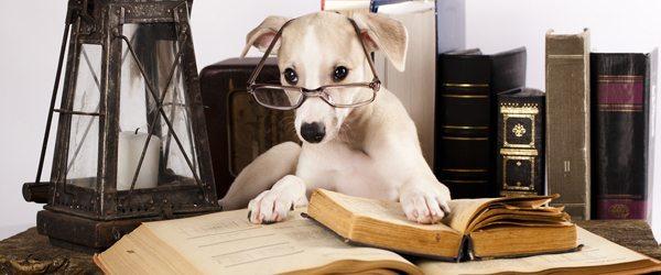 ranking perros listos Ranking de las razas de perros más inteligentes Ranking de las razas de perros más inteligentes perros listos