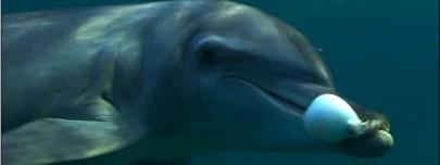 delfines drogandose