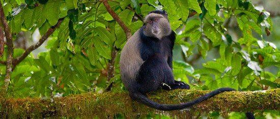 mono azul Mono azul Mono azul img12568