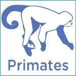 Primates, Monos o simios
