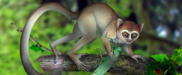 primeros primates Descubierto el esqueleto de primate más antiguo Descubierto el esqueleto de primate más antiguo primeros primates