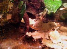 sustrato terrario 2 Sustrato para terrarios de dendrobates Sustrato para terrarios de dendrobates sustrato terrario 2