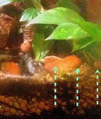 sustrato terrario 3 Sustrato para terrarios de dendrobates Sustrato para terrarios de dendrobates sustrato terrario 3