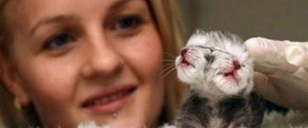 gato con dos caras Nace un gato con dos caras Nace un gato con dos caras gato con dos caras