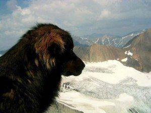 3.19.14-Eulogy-for-Steve-Mason1-590x442 La historia de Mason, el perro que salvó la vida de su dueña enfrentándose a un lobo. La historia de Mason, el perro que salvó la vida de su dueña enfrentándose a un lobo. 3