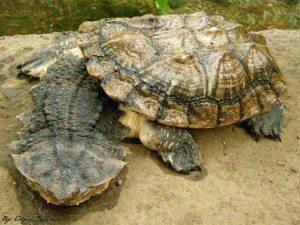 3386298772_d63220293a_b Las 5 tortugas más extrañas del mundo Las 5 tortugas más extrañas del mundo 3386298772 d63220293a b