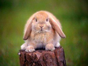 400_1185335369_conejo Antibióticos en conejos y pequeños roedores. Antibióticos en conejos y pequeños roedores 400 1185335369 conejo