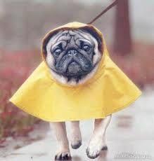 86b787321bb73a8b170ecf5337708169 pretege a tu perro de la lluvia Pretege a tu perro de la lluvia 86b787321bb73a8b170ecf5337708169