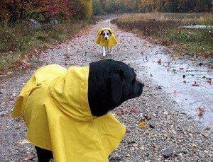 Impermeables-para-perros pretege a tu perro de la lluvia Pretege a tu perro de la lluvia Impermeables para perros